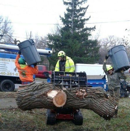 Image 2 | Gatorback Tree Service