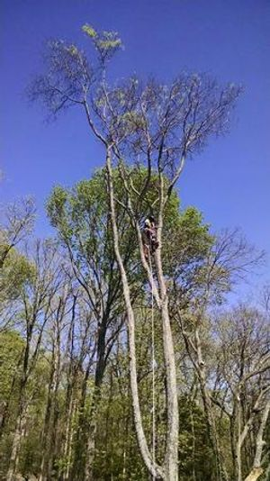 Contact us for tree pruning services!