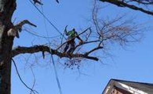 Image 5 | Tree Crews