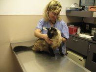 Image 5 | VCA Brookline Animal Hospital