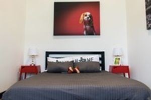 Image 5 | D Pet Hotels Austin