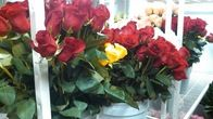 Largest selection of fresh roses to choose from!