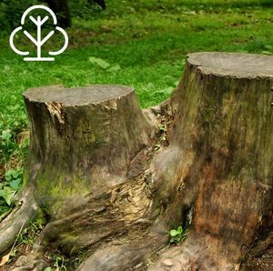 We cut your stumps for you!