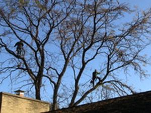 We are tree pruning and plant health care experts!