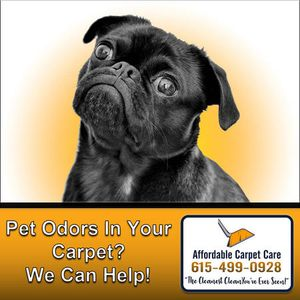 Did your pet make a mess on the floor and you're having the hardest time getting the smell out? We can help! We offer pet odor removal services - contact us today!