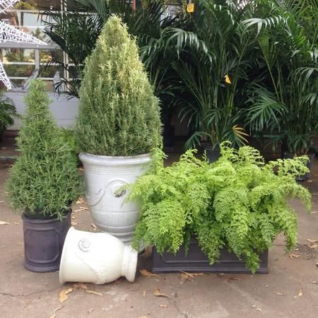 Great selection of indoor and out door plants