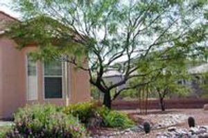 Tree Trimming Tucson