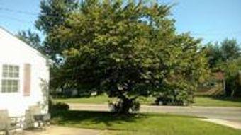 Image 10   Wild Land Tree Care