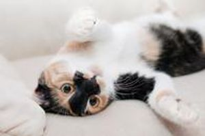 Accidents happen. Schedule a cleaning with Chem-Dry Action to remove pet urine and odors from carpet and upholstery.