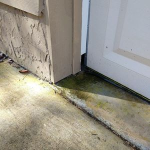 At Blue Ridge Termite & Pest Control, we will stop pests from coming into your home