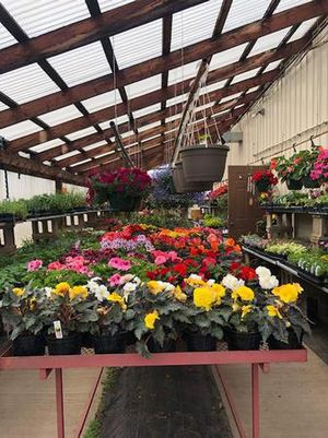 Annuals and perennials available