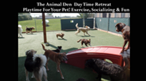 Image 7 | The Animal Den
