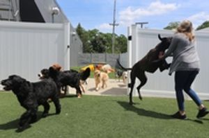 Image 6 | Dog City Daycare