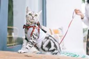 Image 7 | Pet's Choice Animal Hospital