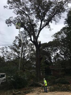 Image 3 | Top of the Line Tree Service, LLC