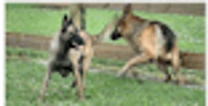 Image 1 | Broward K-9 Services Inc