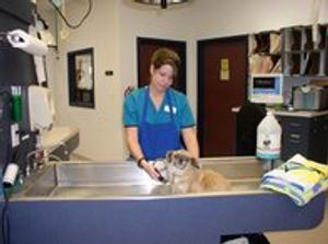 Image 4 | VCA Ben White Animal Hospital