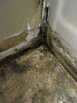 Termite Exterminator in Los Angeles