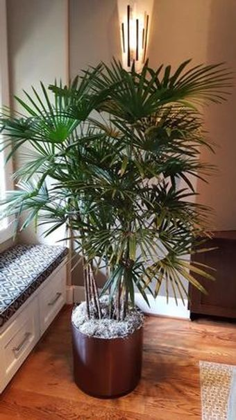 Image 21   Tall Plants