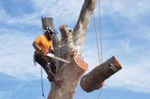 Tree Removal Tucson
