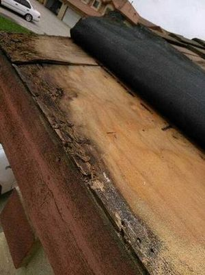 Termite Control in Los Angeles