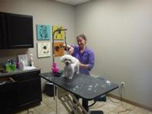 Image 4 | My Vet Animal Hospital