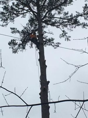 Image 4 | Top of the Line Tree Service, LLC