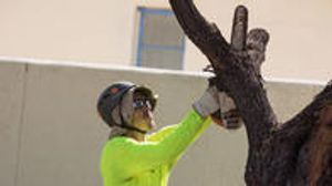 Branching Out Tree Service