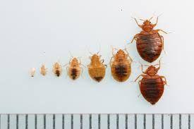 Image 6 | Bobbi Ray's Termite & Pest Control