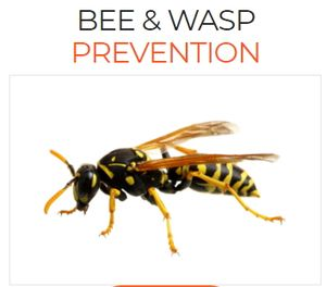 Bee & Wasp Prevention Services