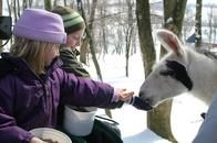 Come pet and feed our friendly animals while taking a ride on a horse drawn wagon!