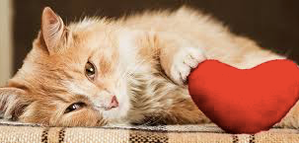 Do you need someone to deliver pet products at your doorsteps? Love's Pets is a local store-to-door delivery service in Agoura Hills, CA to fulfill all of your companion animal's needs.