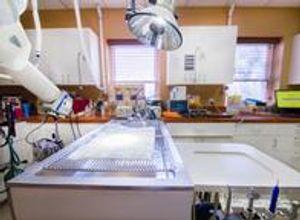 VCA Cat Hospital of Philadelphia Dental