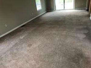Image 4 | Hampton Carpet Cleaning