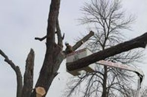 Tree Removal: Specializing in all tree removals of any size, we use the newest techniques and equipment to ensure a fast, safe tree removal.