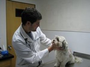 Image 5 | VCA Blossom Hill Animal Hospital