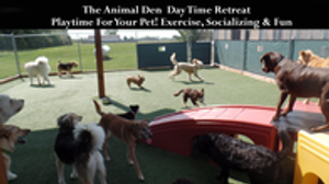 Image 4 | The Animal Den