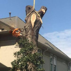 Sticks Tree Service Inc. has been serving Cypress and surrounding areas as the premier tree removal company since 1979.
