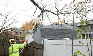 Image 2   Precise Tree Care Inc