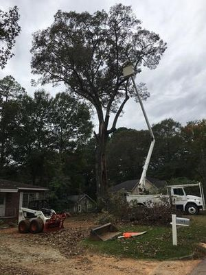 Image 2 | Top of the Line Tree Service, LLC