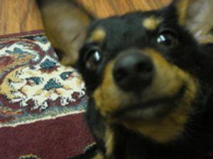 Caesar The Dental Dog
