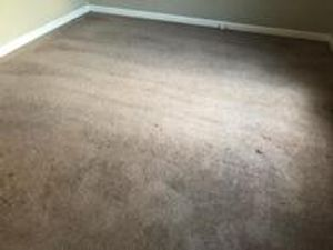 Image 3 | Hampton Carpet Cleaning