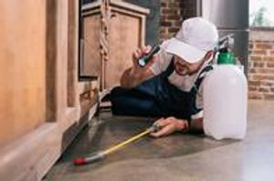 No matter if you're a homeowner, property owner, or hotel manager, we can remove pests from your property.