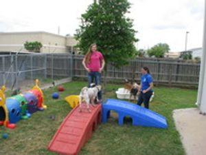 Image 2 | Tomball Pet Resort