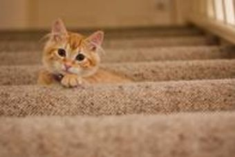 Our cleaning solution removes an average of 99.2% of the bacteria from pet urine stains in carpets.
