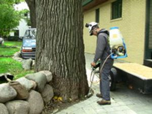 We diagnose trees and treat them for diseases or insects.
