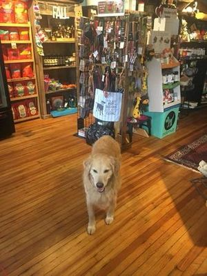Best pet store for dog collars, dog food, dog treats, and pet clothes.