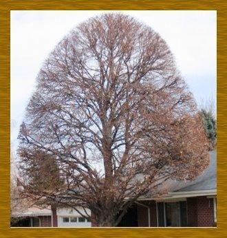 Image 5   Arbor-Pro Tree Experts
