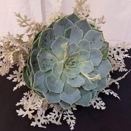Image 6 | Alexs East End Floral Shoppe