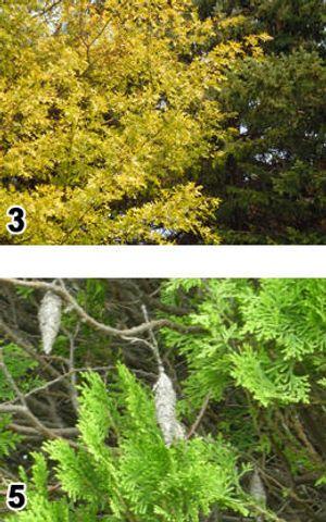 Image 2 | Thomas Tree Service